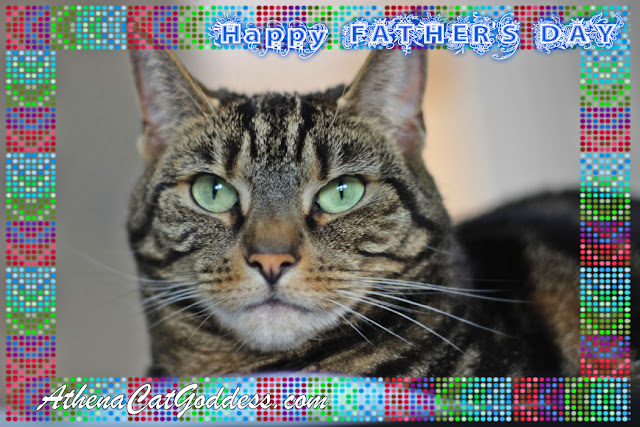 tabby cat father's day card
