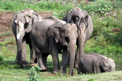 kaziranga-national-park-india, assam tourist places, tourist places at assam, tourist places of assam, tourist places in assam, tourist places in assam, tourist places in assam,tea_garden_in_Dibrugarh.jpg