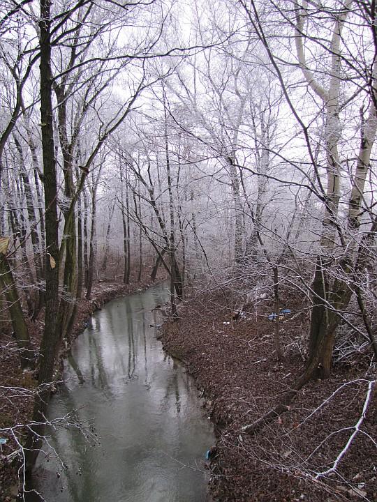 Rzeka Dłubnia.
