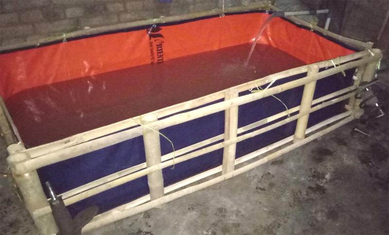 Peluang Usaha Budidaya Ikan Lele di Kolam Terpal Untuk Pemula