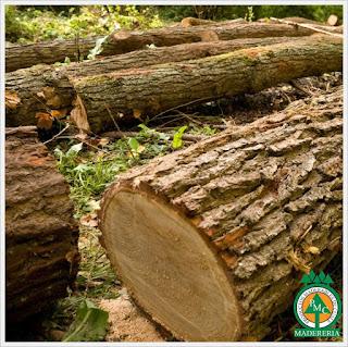 madera-maderas-de-cuale-puerto-vallarta