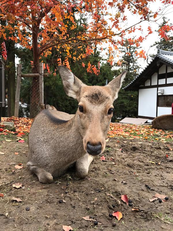 鹿が神様 | 2016-11-24 の日々雑感
