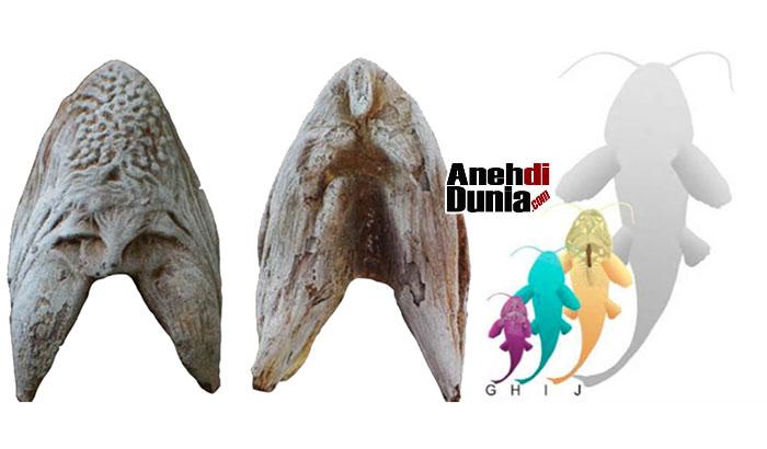 Fosil Ikan Lele Raksasa Di Gurun Sahara