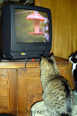 Is your Siamese sad? Tabby troubled? Burmese bored? If your cat needs entertainment, check out these action movies for bored cats, made just for them!