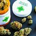 Justiça autoriza cultivo de Cannabis para tratamento de criança no Recife