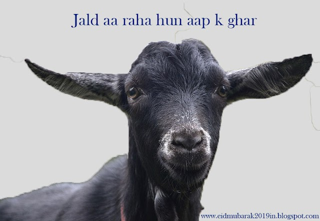 Eid ul Adha - Qurbani Ki Rooh