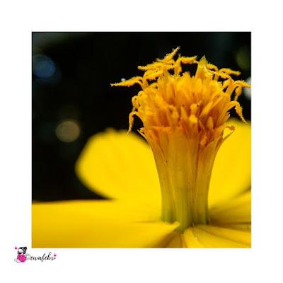 contoh hasil foto macro lens aukey