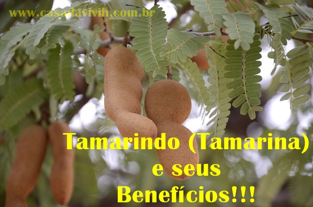Tamarindo (Tamarina) e Seus inúmeros benefícios... Ele ajuda a emagrecer?