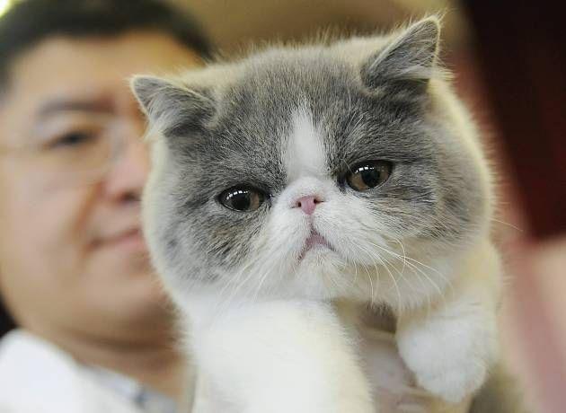 Gambar kucing Garfield