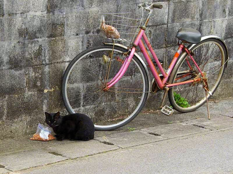 black cat eating from bag by bicycle