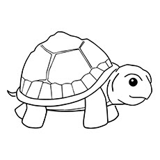 Small Baby Turtle Coloring Pages For Kids Images
