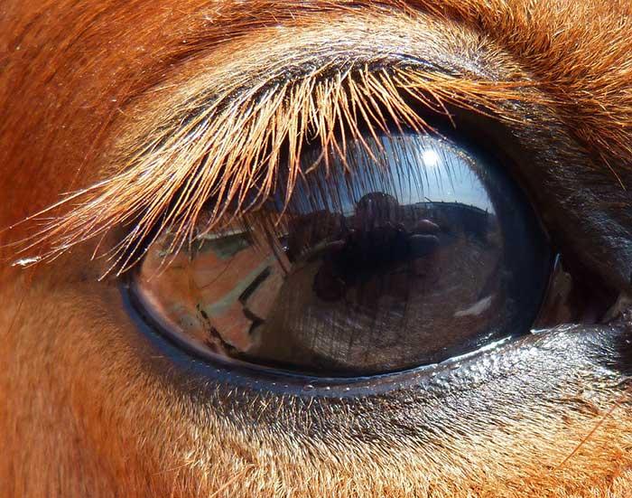 Kuda Punya Tiga Kelopak Mata