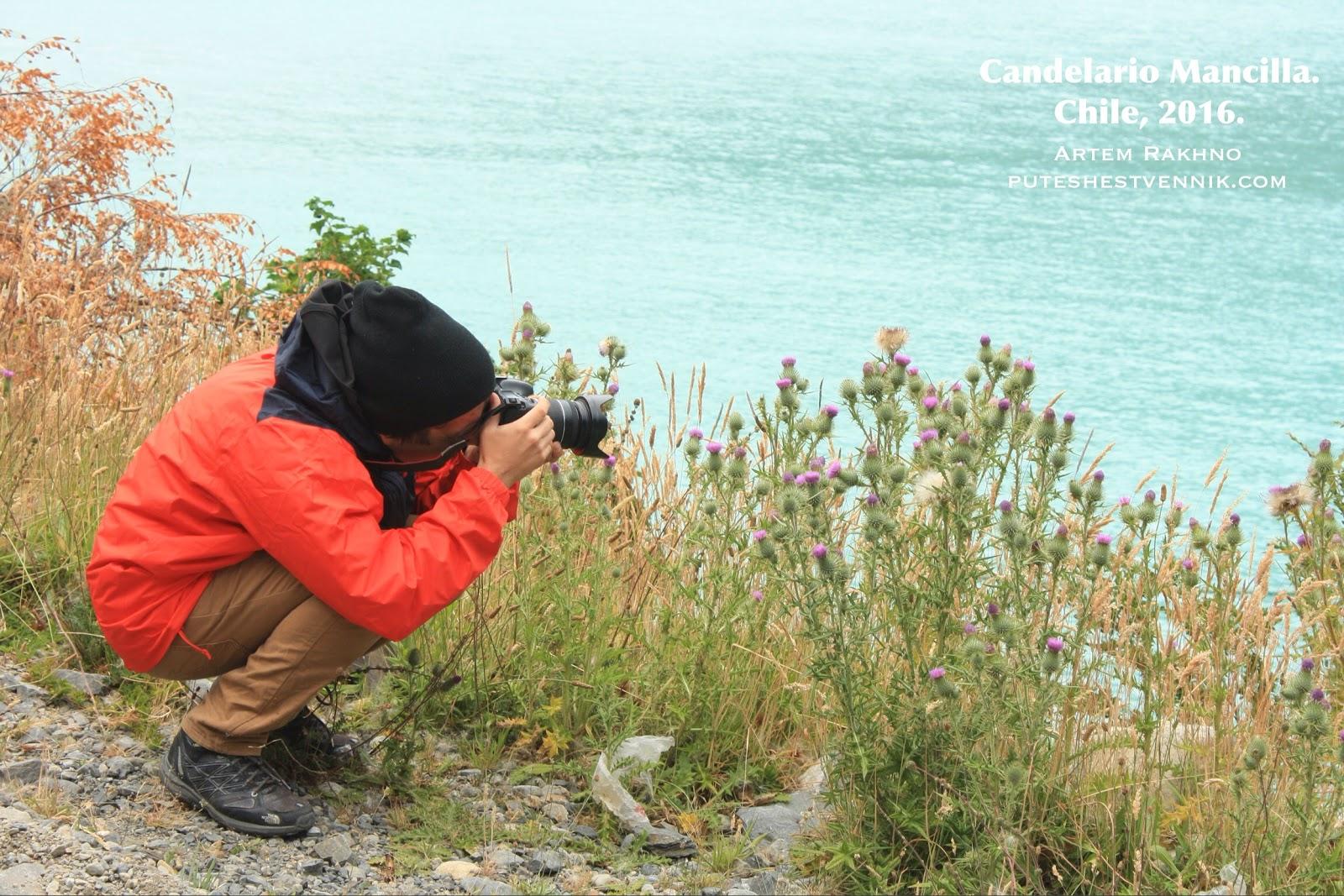 Путешественник фотографирует чертополох