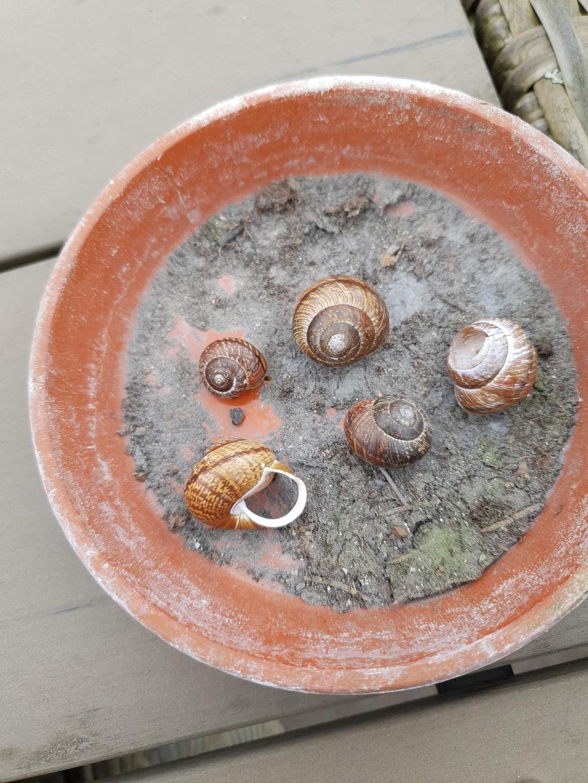 You know that you live on an island when...sea shells snails elisabeth rundlof
