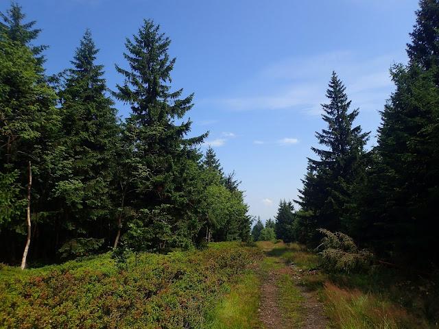 Szlak biegnie przez chwilę granicą polsko-czeską