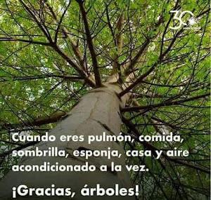 Gracias árboles