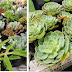 Spot your plants: Green Hub and Urban Gardening/Farming Fair at SM City San Mateo and  SM Center Angono