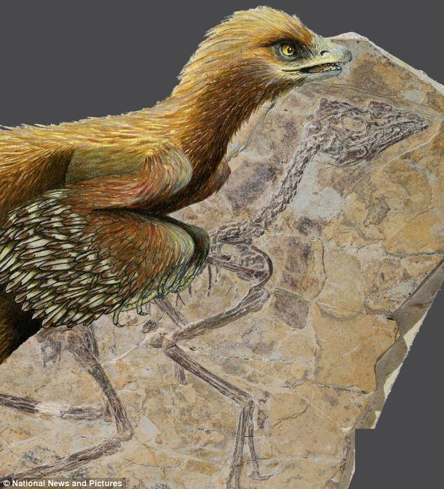 Burung terawal ditemui! Dawn 10-juta tahun lebih tua daripada Archaeopteryx