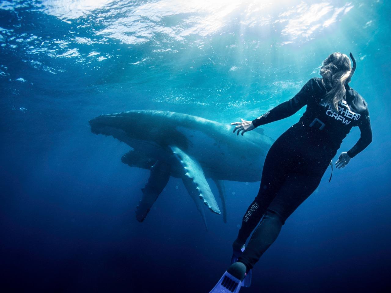 SEA SHEPERD divulga Dia do Meio Ambiente