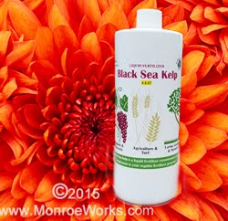 New! Black Sea Kelp