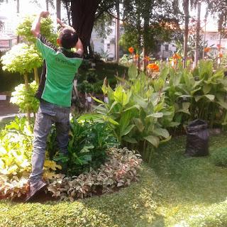 jasa tukang taman