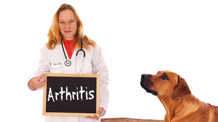 arthritis-dog-food