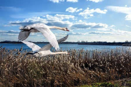 Bầy thiên ngay vỗ cánh (kỳ 7)- Phan Nhật Bắc