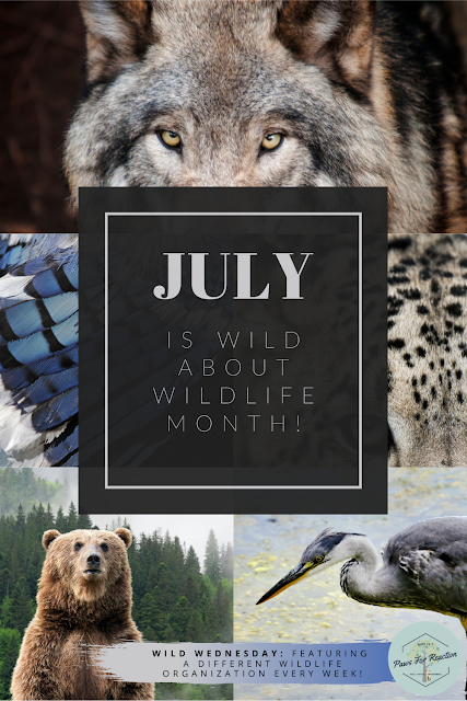 Wild Wednesday: Aspen Valley Wildlife Sanctuary is a leader in wildlife rehabilitation #WildWednesday