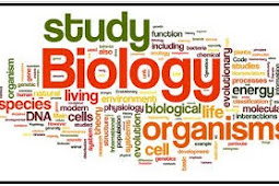 Filum Platyhelminthes, Klasifikasi Platyhelminthes