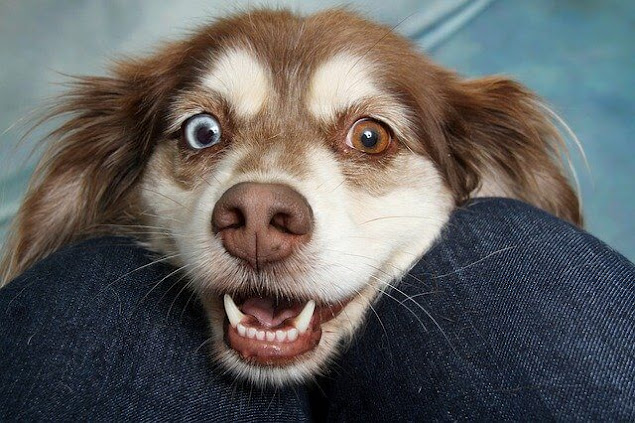 5 Wonderful Things I Wish I'd Known When My Dog Died | Rainbow Bridge | Animal Crossing