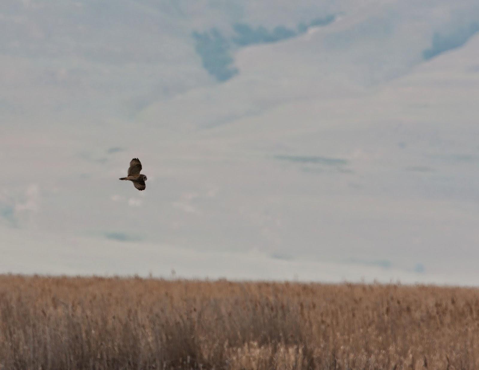 Garden Birds and other sightings...: USA 2014 - Salt Lake City