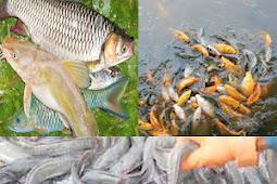 Mata Pelajaran SMK Jurusan Agribisnis Perikanan Air Tawar