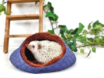 ハリネズミ ベッド