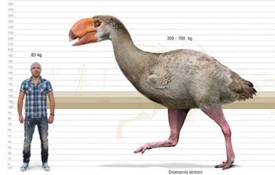 Tamaño Dromornis stirtoni