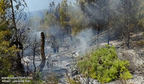 النيران تلتهم مساحات شاسعة من غابة وامشاش بتلعصة