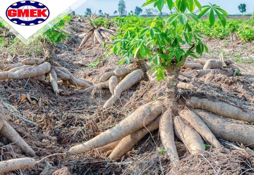 Quy trình sản xuất tinh bột sắn lấy bột sắn làm nguyên liệu