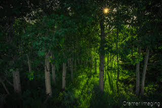Cramer Imaging's landscape photograph of a quaking aspen grove of trees near Alta, Wyoming with a sunburst or sun star