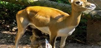 كيف تتوالد الحيوانات على سطح الأرض؟