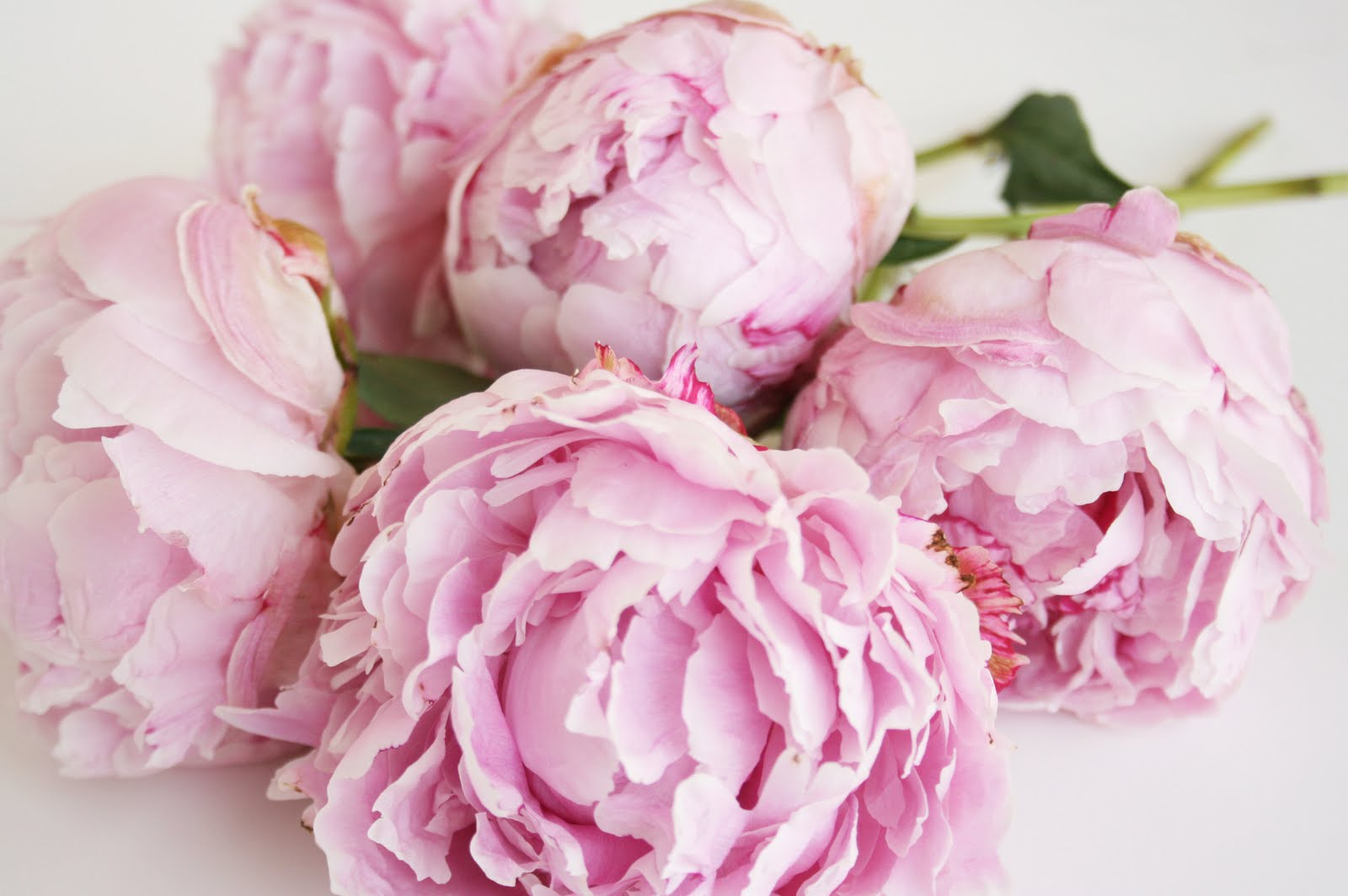 ... ever get a huge bouquet of peonies like the one above!!! Heavenly