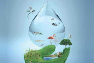 Realizarán en México Expo Internacional de Riego Sustentable
