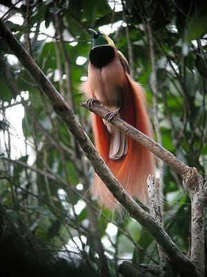 3000+ Gambar Burung Orang Indonesia HD Paling Baru