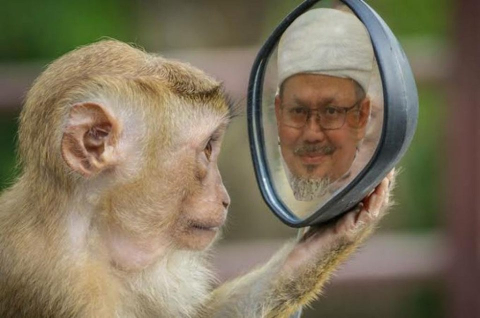 Dibalik Foto Monyet Bercermin Ustaz Tengku