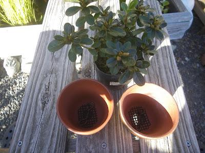 植え付ける鉢