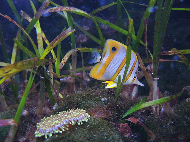 Parijs: het aquarium tropical in Palais de la porte Dorée