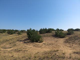 Региональный ландшафтный парк «Клебан-Бык». Сосновый лес