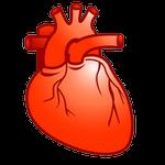 heart in Spanish, corazón