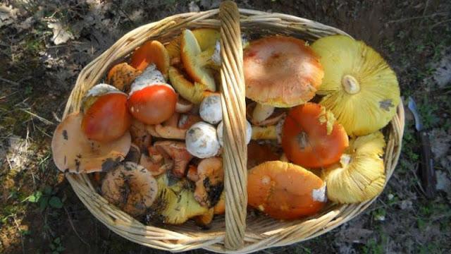 Εξόρμηση για μανιτάρια από τη Βουνοπαρέα Αργολίδας στο δάσος της Ζαρούχλας