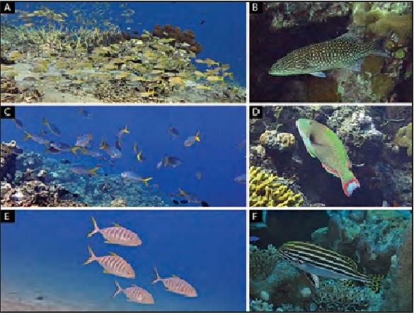 Ikan Target di Karang di Perairan Kepulauan Togean
