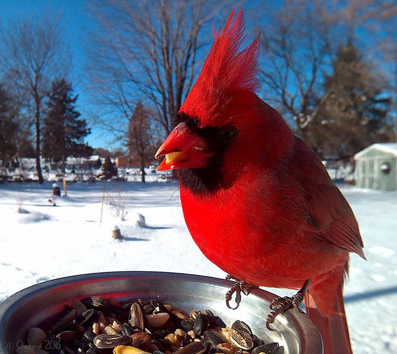 Mujer instala un alimentador de aves con cámara para capturar increibles primeros planos
