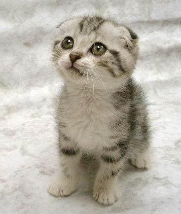 cute cat faces funny cats face kitten kitty cutest adorable kittens pretty sweet please did animal really sad oh kitties